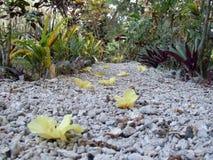 Blossom on a pebble path Stock Photo