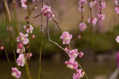Blossom, Pink, Branch, Flower stock photo