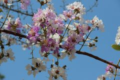 Blossom, Pink, Branch, Flower stock image