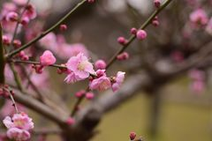 Blossom, Pink, Branch, Spring royalty free stock image