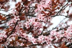Blossom, Pink, Branch, Spring stock photography
