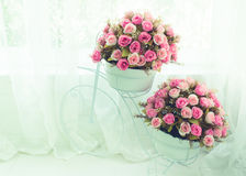 Blossom - pink flower, floral background Royalty Free Stock Photos