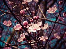 Blossom, Plant, Pink, Branch stock image