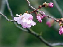 Blossom, Plant, Spring, Flower royalty free stock image