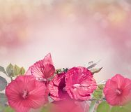 Red Hibiscus Flowers Stock Photos