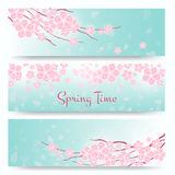 Blossom sakura or cherry cards. Spring  flowers banners Stock Photos