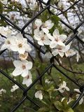Blossom, Spring, Branch, Flower stock photography