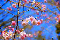 Blossom, Spring, Branch, Pink stock photography