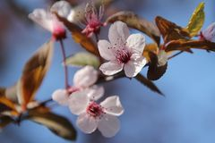 Blossom, Spring, Flower, Branch royalty free stock images