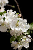 Blossom spring-flowers with shallow depth of field Stock Photography