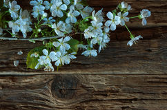 Blossom spring flowers Royalty Free Stock Image
