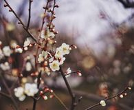 Blossom in spring Royalty Free Stock Images
