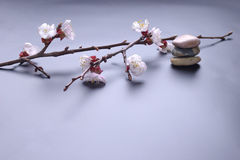 Blossom and stones. Asian style background Stock Images
