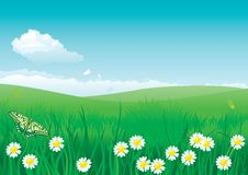 Blossom summer. Vector illustration of summer landscape with butterflies, many flowers on green grass and blue sky with fluffy clouds Stock Photography