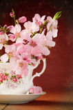Blossom In Teacup. Spring blossom in cup and saucer Royalty Free Stock Image