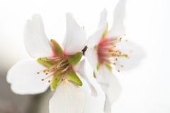 Blossom time Stock Photos