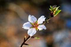Blossom time Stock Photo