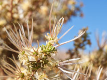 From blossom to seed Stock Photography