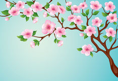 Blossom tree. Spring tree with pink blossoms on the blue sky background Stock Images