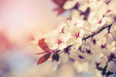 Blossom of the tree Royalty Free Stock Images