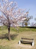 Blossom tree and bench Stock Images