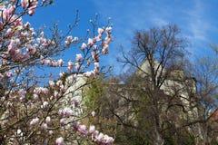 Blossom tree Royalty Free Stock Photos