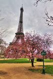 Blossom tree Eiffel Royalty Free Stock Photography