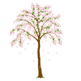 Blossom tree Stock Photos