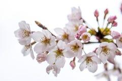 Blossom on tree Stock Image