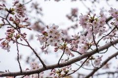 Blossom on tree Stock Photo