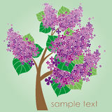 Blossom tree with lilac flowers Stock Photos