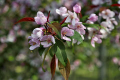 Blossom tree over nature background/ Spring flowers Stock Photography