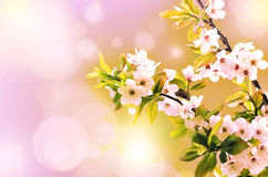Blossom tree over nature background. Spring flowers. Spring Background stock images