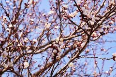 Flowering trees in spring stock images
