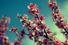 Blossom tree over nature background/ Spring flowers/Spring Backg Stock Photos