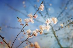 Beauty of Springtime  and spring spirit Royalty Free Stock Images