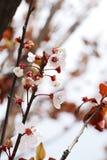 Springtime Tree flowers background Royalty Free Stock Photo