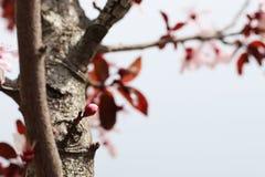 Springtime Tree flowers background Stock Images
