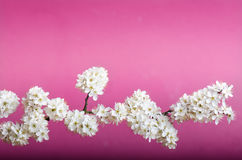 Blossom trees and flowers. Beautiful spring nature view on a violet background. Trees Concept of spring and summer seasons. Blossom trees and flowers. Beautiful Stock Photography