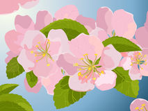 Blossom, vector Royalty Free Stock Images