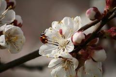 Blossom, White, Spring, Flower