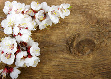 Blossom on wood Royalty Free Stock Image