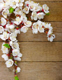 Blossom on wood Royalty Free Stock Photography