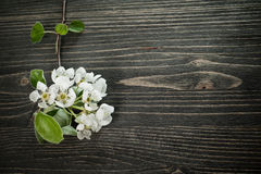 Blossom on a wooden background Royalty Free Stock Image