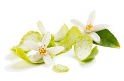 Blossom and zest of lime Royalty Free Stock Photo