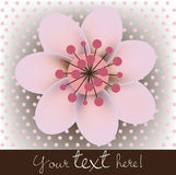 Blossomed cherry flower card Stock Photos