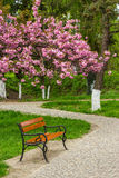 Blossomed sakura flowers over the bench Stock Photography