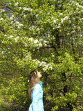 Blossomed tree. The girl is smelling beutiful blossomed tree Stock Photography