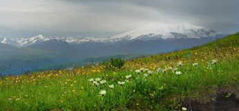 Blossomimg meadow. This is blossoming meadow in Caucasus mountains in somber morning Royalty Free Stock Images