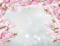 Blossoming белые цветки дерева Стоковые Изображения